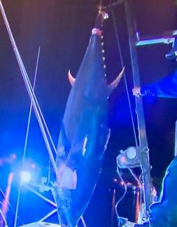 "New Custom Tuna Stand up 6' 2"" Deep Sea Fishing Trolling R"